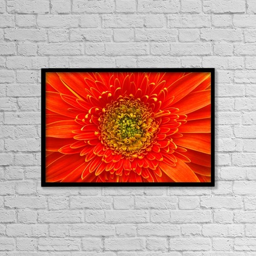 "Printscapes Wall Art: 18"" x 12"" Canvas Print With Black Frame - Closeup Of Orange Gerbera Flower by Corey Hochachka"