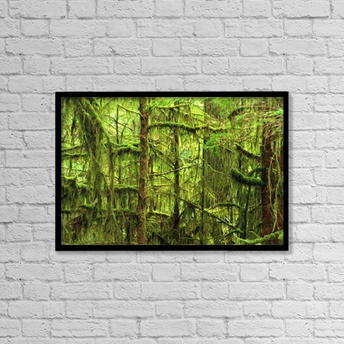 "Printscapes Wall Art: 18"" x 12"" Canvas Print With Black Frame - Moss-Covered Trees by Corey Hochachka"