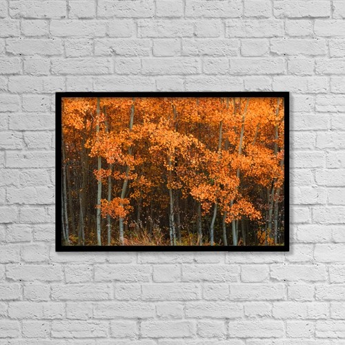 "Printscapes Wall Art: 18"" x 12"" Canvas Print With Black Frame - Deciduous Aspen Forest In Fall by Corey Hochachka"