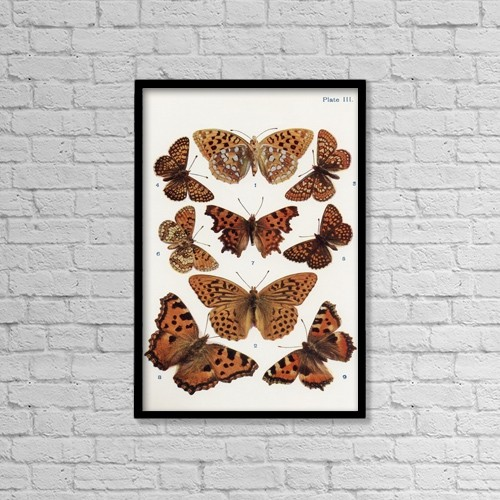"Printscapes Wall Art: 12"" x 18"" Canvas Print With Black Frame - Different Types Of Butterflies by Hilary Jane Morgan"