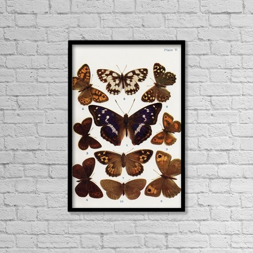 """Printscapes Wall Art: 12"""" x 18"""" Canvas Print With Black Frame - Different Types Of Butterflies by Hilary Jane Morgan"""
