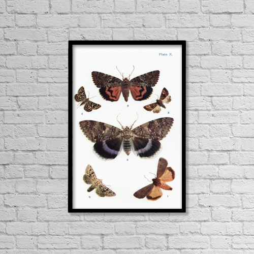 "Printscapes Wall Art: 12"" x 18"" Canvas Print With Black Frame - Different Types Of Moths by Hilary Jane Morgan"