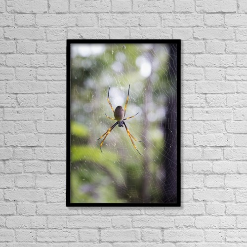 "Printscapes Wall Art: 12"" x 18"" Canvas Print With Black Frame - Spider In A Web by John Short"