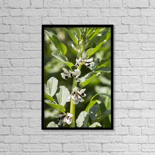 "Printscapes Wall Art: 12"" x 18"" Canvas Print With Black Frame - Close Up Of Fava Bean Blossoms by Michael Interisano"