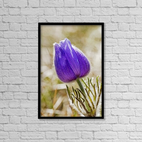 "Printscapes Wall Art: 12"" x 18"" Canvas Print With Black Frame - Close Up Of A Crocus Flower by Michael Interisano"