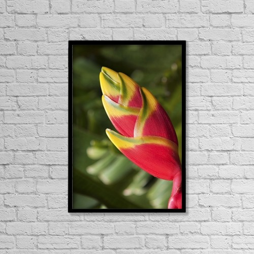 "Printscapes Wall Art: 12"" x 18"" Canvas Print With Black Frame - Close-Up Of Lobster-Claw Heliconia Flower by Jenna Szerlag"