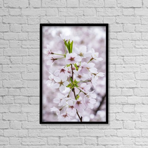 "Printscapes Wall Art: 12"" x 18"" Canvas Print With Black Frame - Close Up Of Cherry Blossoms In Hampstead by Leah Bignell"