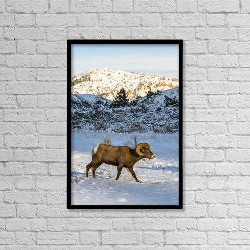 "Printscapes Wall Art: 12"" x 18"" Canvas Print With Black Frame - Animals by Kenneth Whitten"
