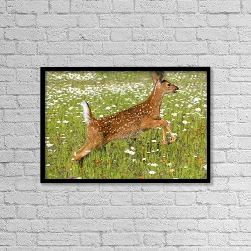 "Printscapes Wall Art: 18"" x 12"" Canvas Print With Black Frame - Animals by John Pitcher"