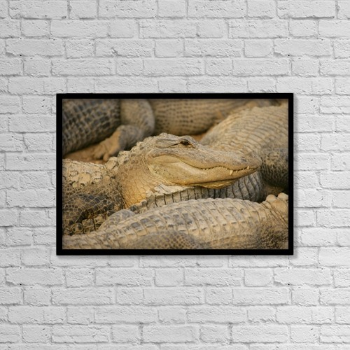 "Printscapes Wall Art: 18"" x 12"" Canvas Print With Black Frame - Alligators by Don Hammond"