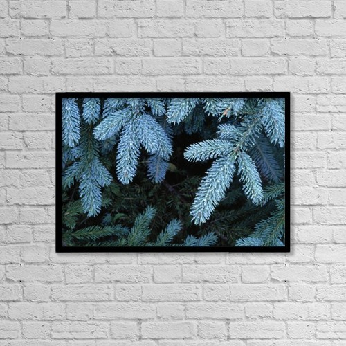 """Printscapes Wall Art: 18"""" x 12"""" Canvas Print With Black Frame - Frozen Pine Needles by Natural Selection John Reddy"""