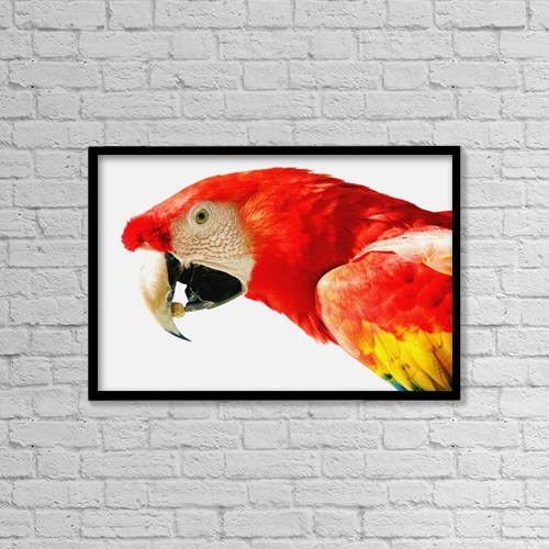 "Printscapes Wall Art: 18"" x 12"" Canvas Print With Black Frame - Scarlet Macaw by Darren Greenwood"