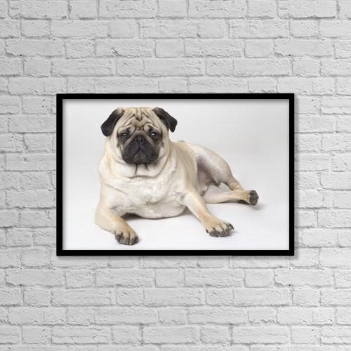"Printscapes Wall Art: 18"" x 12"" Canvas Print With Black Frame - Pedigree Pug Dog by Corey Hochachka"