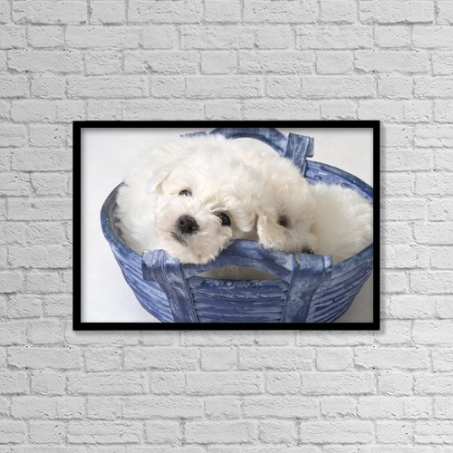 "Printscapes Wall Art: 18"" x 12"" Canvas Print With Black Frame - Cute White Pups by Corey Hochachka"