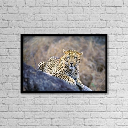 "Printscapes Wall Art: 18"" x 12"" Canvas Print With Black Frame - Male Leopard by John Pitcher"