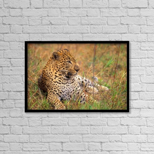 """Printscapes Wall Art: 18"""" x 12"""" Canvas Print With Black Frame - Leopard Lying In Grass by John Pitcher"""