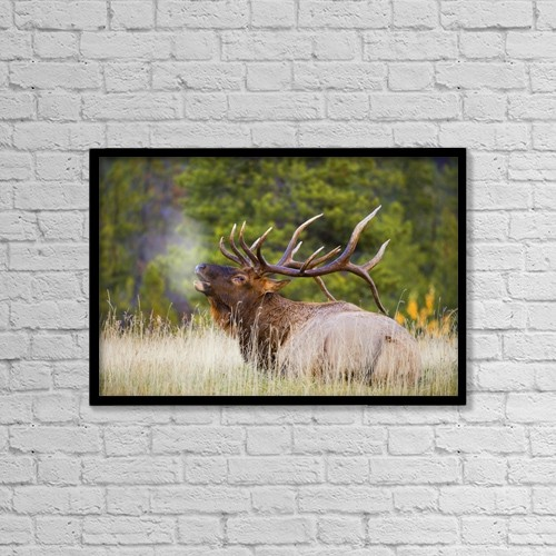"Printscapes Wall Art: 18"" x 12"" Canvas Print With Black Frame - Bull Elk by Carson Ganci"