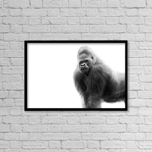 "Printscapes Wall Art: 18"" x 12"" Canvas Print With Black Frame - Black And White Portrait Of A Gorilla by Darren Greenwood"