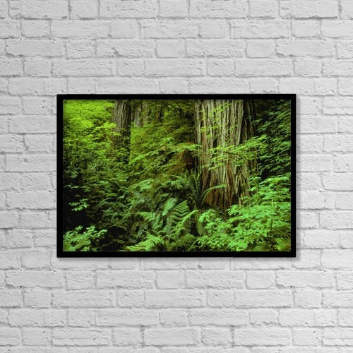 "Printscapes Wall Art: 18"" x 12"" Canvas Print With Black Frame - Large Tree Trunks And Forest Floor by Don Hammond"