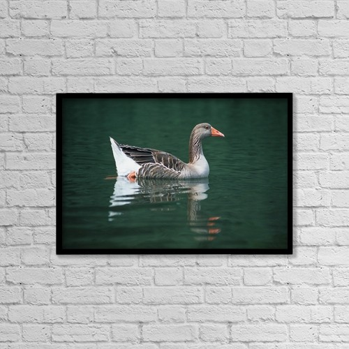 "Printscapes Wall Art: 18"" x 12"" Canvas Print With Black Frame - Duck On Water by Corey Hochachka"