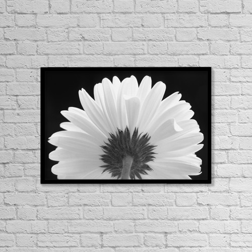 "Printscapes Wall Art: 18"" x 12"" Canvas Print With Black Frame - Flower In Black And White by Corey Hochachka"