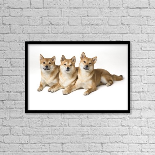 "Printscapes Wall Art: 18"" x 12"" Canvas Print With Black Frame - Three Shiba Inu Dogs by Corey Hochachka"