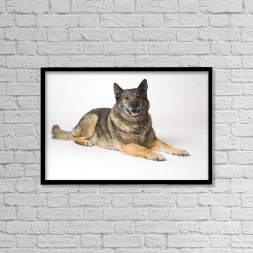 "Printscapes Wall Art: 18"" x 12"" Canvas Print With Black Frame - Portrait Of A German Shepherd Dog by Corey Hochachka"