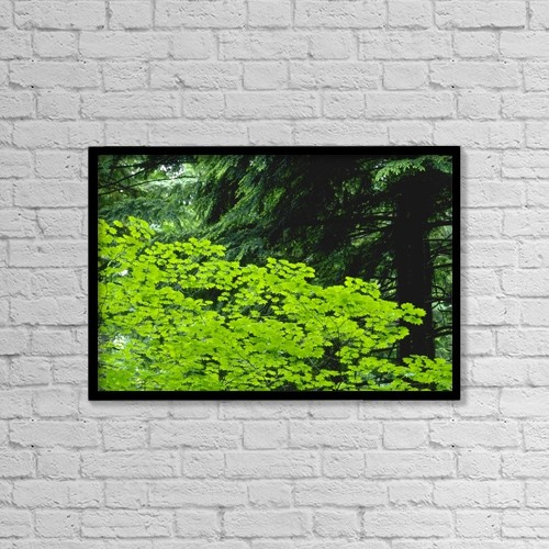 """Printscapes Wall Art: 18"""" x 12"""" Canvas Print With Black Frame - Umbrella Of Trees In Forest by Jim Weeks"""