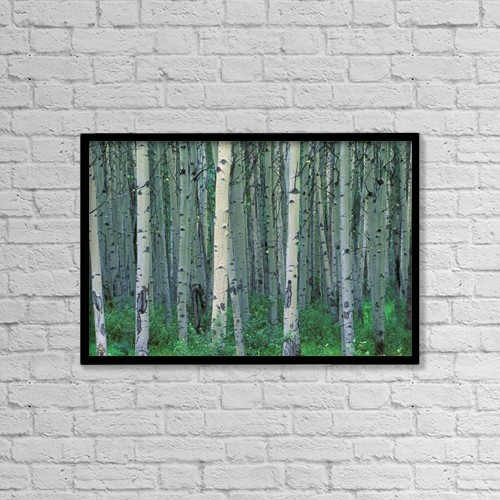 "Printscapes Wall Art: 18"" x 12"" Canvas Print With Black Frame - A Forest Of Trees by Corey Hochachka"