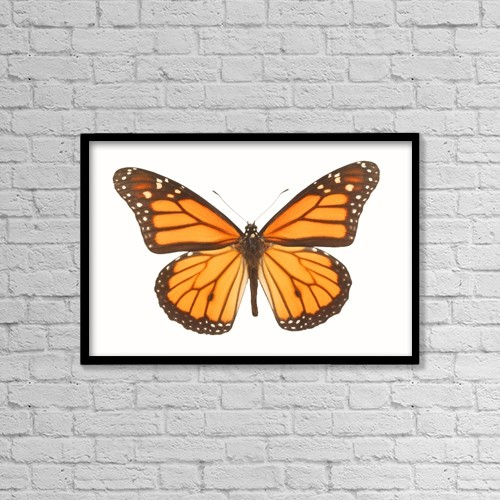 "Printscapes Wall Art: 18"" x 12"" Canvas Print With Black Frame - Closeup Of A Butterfly by Don Hammond"