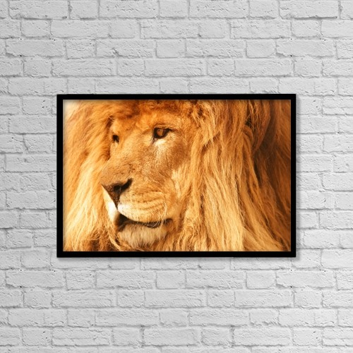 """Printscapes Wall Art: 18"""" x 12"""" Canvas Print With Black Frame - A Lion by Con Tanasiuk"""