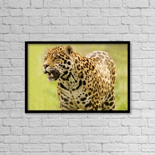 "Printscapes Wall Art: 18"" x 12"" Canvas Print With Black Frame - A Leopard by Con Tanasiuk"