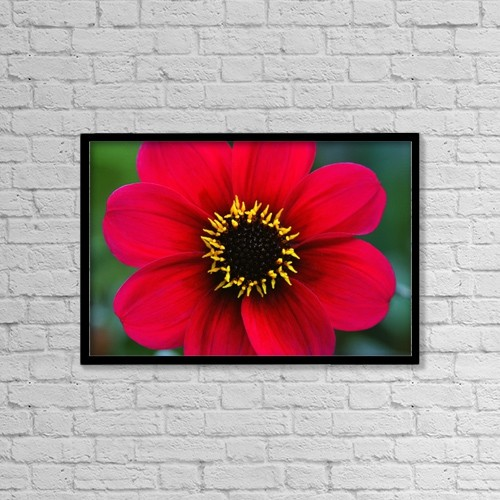 "Printscapes Wall Art: 18"" x 12"" Canvas Print With Black Frame - Red Flower by Corey Hochachka"