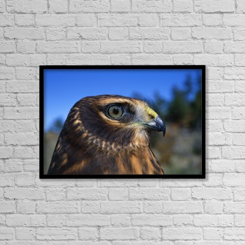 """Printscapes Wall Art: 18"""" x 12"""" Canvas Print With Black Frame - Animals by Natural Selection David Ponton"""