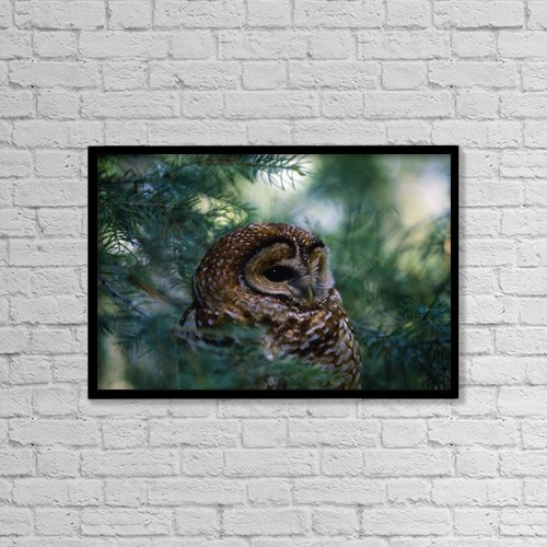 "Printscapes Wall Art: 18"" x 12"" Canvas Print With Black Frame - Animals by Natural Selection David Ponton"