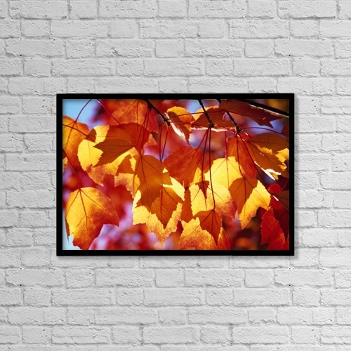 "Printscapes Wall Art: 18"" x 12"" Canvas Print With Black Frame - Autumn Leaves by Natural Selection Craig Tuttle"