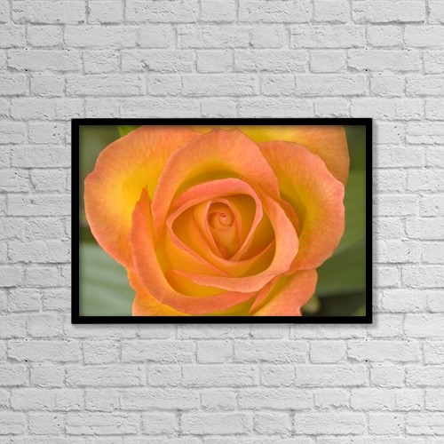 """Printscapes Wall Art: 18"""" x 12"""" Canvas Print With Black Frame - Hybrid Tea Rose Circus by John Pitcher"""