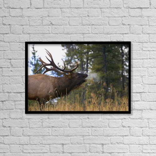 "Printscapes Wall Art: 18"" x 12"" Canvas Print With Black Frame - Bull Elk Bugling by Carson Ganci"