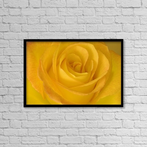 "Printscapes Wall Art: 18"" x 12"" Canvas Print With Black Frame - Yellow Tea Rose by John Pitcher"