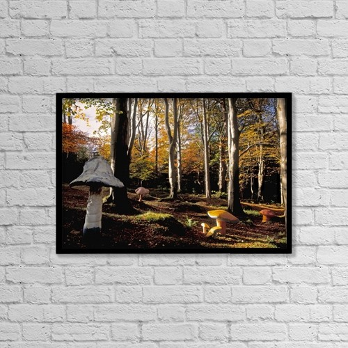 "Printscapes Wall Art: 18"" x 12"" Canvas Print With Black Frame - Mushrooms In A Forest by The Irish Image Collection"