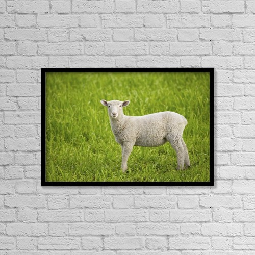 "Printscapes Wall Art: 18"" x 12"" Canvas Print With Black Frame - Lamb by Don Hammond"
