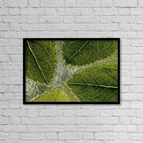 "Printscapes Wall Art: 18"" x 12"" Canvas Print With Black Frame - Leaves On Water by Natural Selection Chris Pinchbeck"