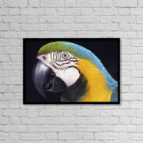 "Printscapes Wall Art: 18"" x 12"" Canvas Print With Black Frame - Parrot by Natural Selection Ralph Curtin"