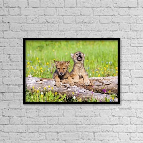 """Printscapes Wall Art: 18"""" x 12"""" Canvas Print With Black Frame - Wolf Cubs On Log by John Pitcher"""