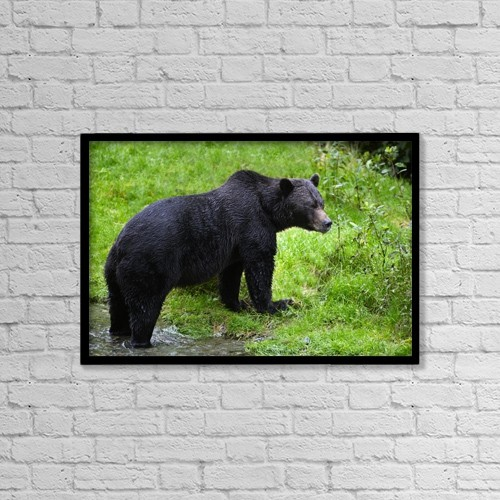 "Printscapes Wall Art: 18"" x 12"" Canvas Print With Black Frame - Black Bear by Richard Wear"
