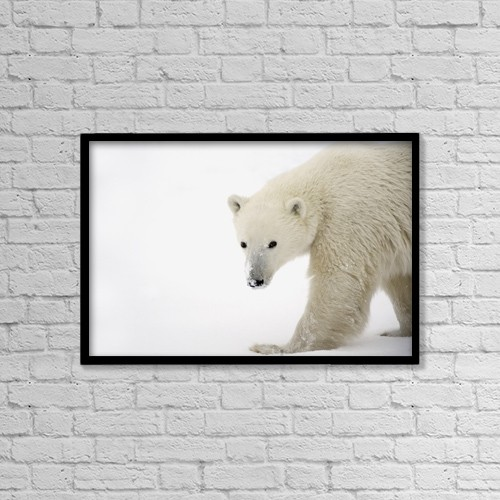 "Printscapes Wall Art: 18"" x 12"" Canvas Print With Black Frame - Polar Bear by Richard Wear"