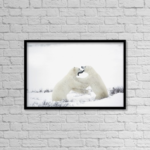 "Printscapes Wall Art: 18"" x 12"" Canvas Print With Black Frame - Polar Bears Fighting by Richard Wear"