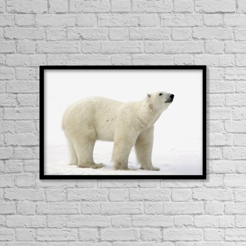"Printscapes Wall Art: 18"" x 12"" Canvas Print With Black Frame - Polar Bear (Ursus Maritimus) by Richard Wear"