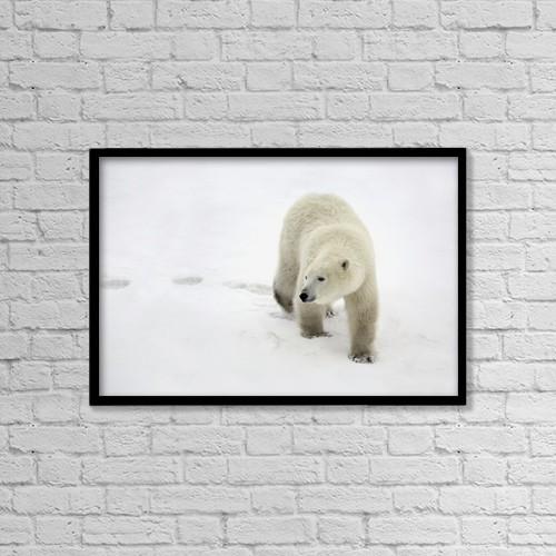 "Printscapes Wall Art: 18"" x 12"" Canvas Print With Black Frame - Polar Bear Walking by Richard Wear"