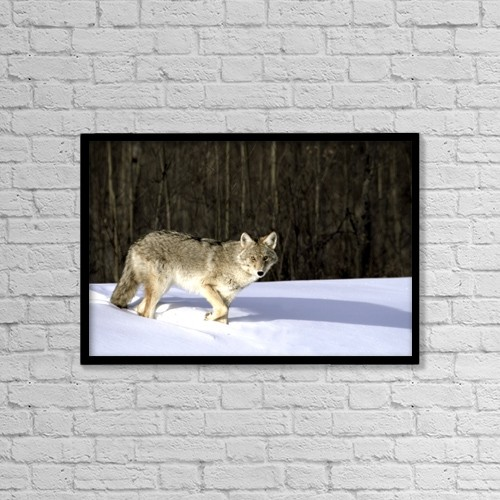 "Printscapes Wall Art: 18"" x 12"" Canvas Print With Black Frame - Coyote In Winter by Richard Wear"